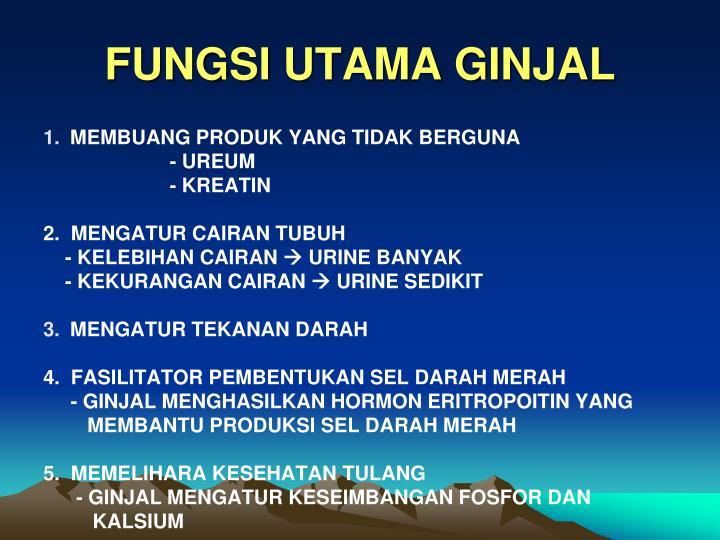 FUNGSI UTAMA GINJAL