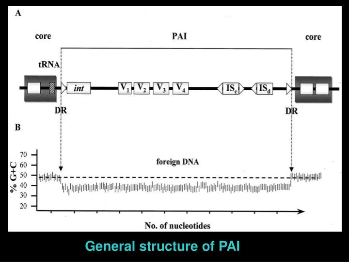 General structure of PAI