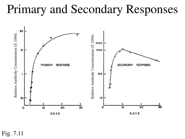 Primary and Secondary Responses