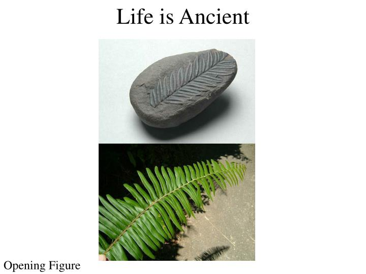 Life is Ancient