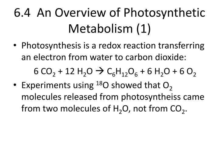 6.4  An Overview of Photosynthetic Metabolism (1)