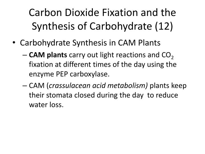 Carbon Dioxide Fixation and the Synthesis of Carbohydrate (12)