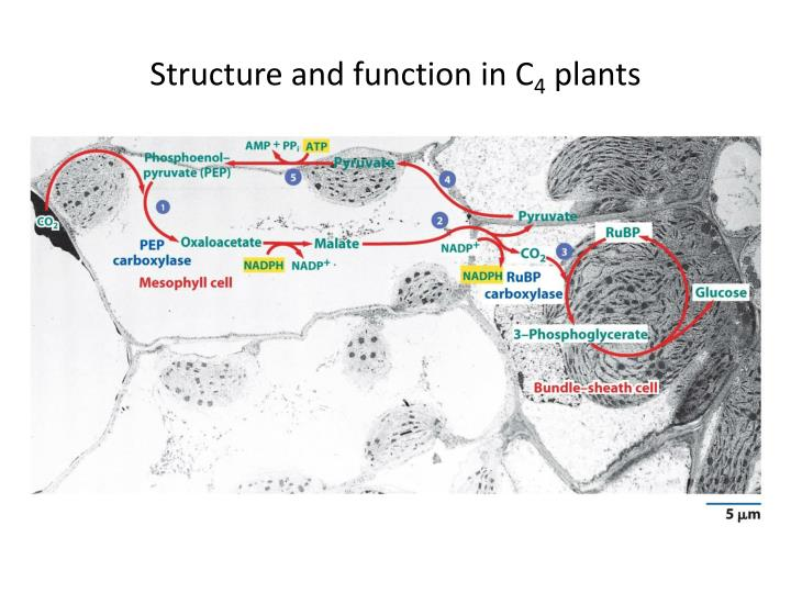 Structure and function in C