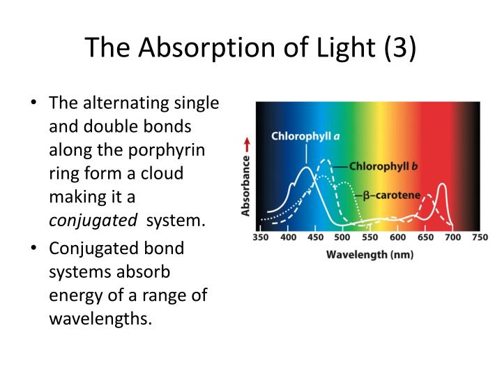 The Absorption of Light (3)
