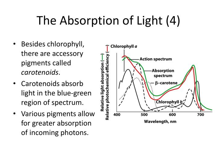 The Absorption of Light (4)