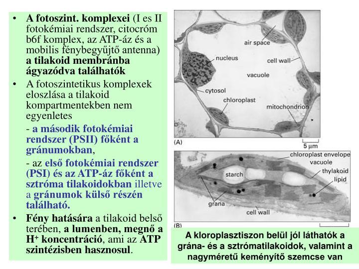 A fotoszint. komplexei