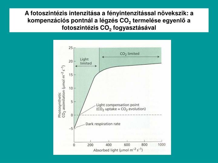 A fotoszintézis intenzitása a fényintenzitással növekszik: a kompenzációs pontnál a légzés CO