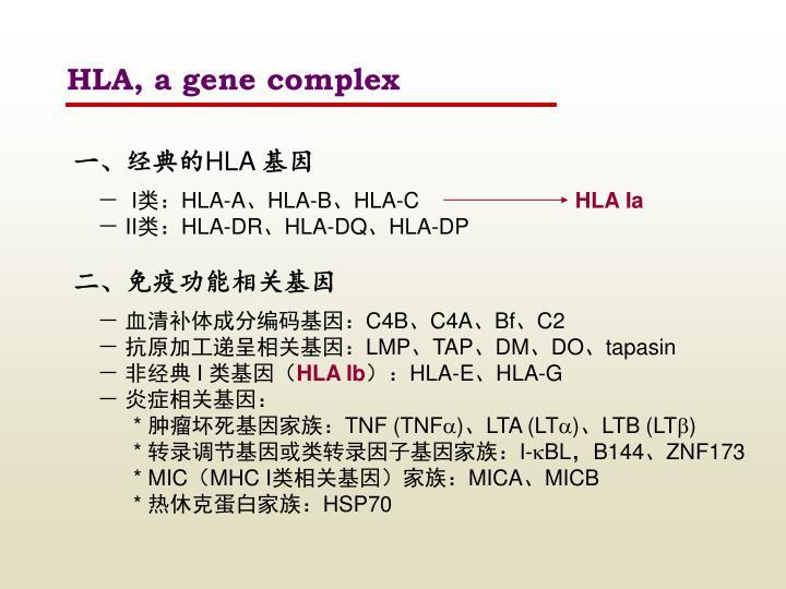HLA, a gene complex