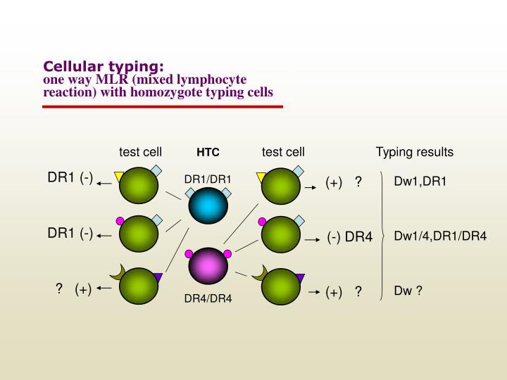 Cellular typing: