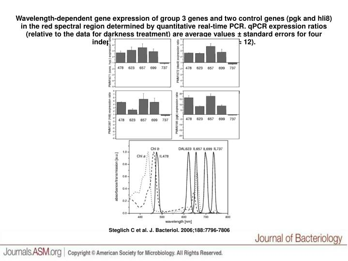 Wavelength-dependent gene expression of group 3 genes and two control genes (pgk and hli8) in the re...
