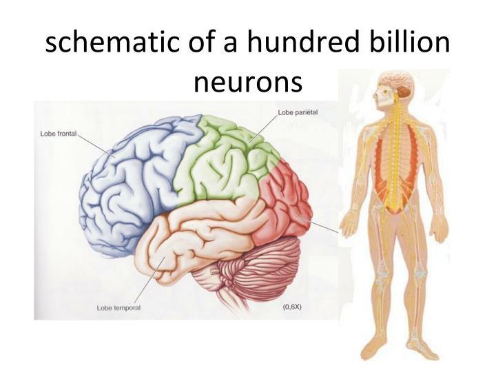 schematic of a hundred billion neurons