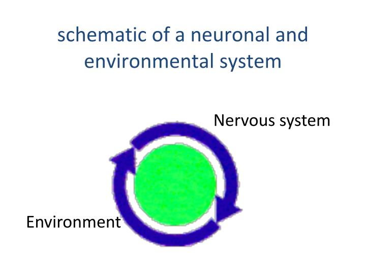 schematic of a neuronal and environmental system