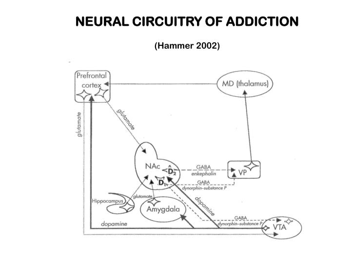 NEURAL CIRCUITRY OF ADDICTION