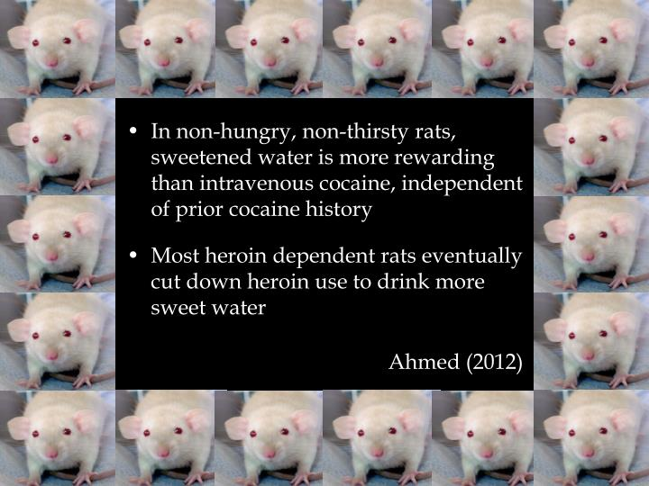 In non-hungry, non-thirsty rats, sweetened water is more rewarding than intravenous cocaine, independent of prior cocaine history