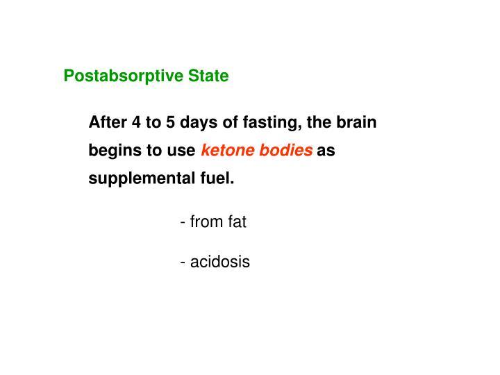 Postabsorptive State