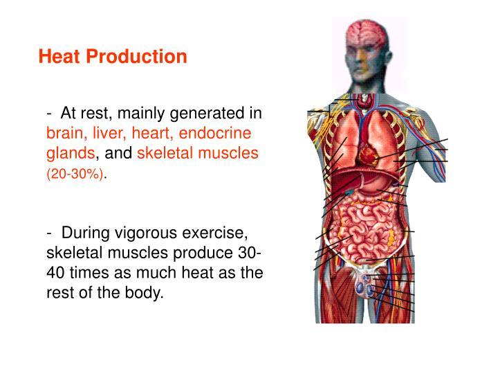 Heat Production