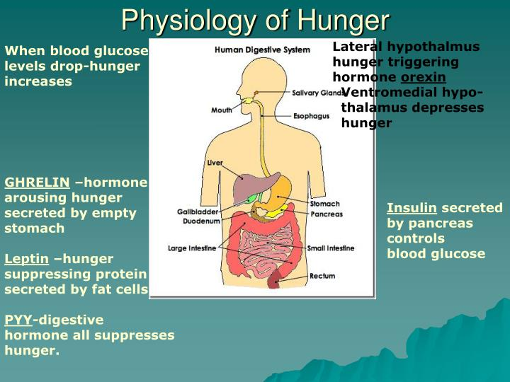 Physiology of Hunger