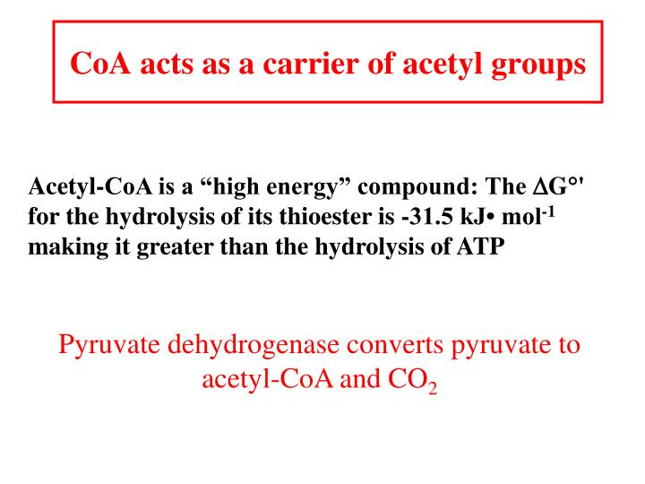 CoA acts as a carrier of acetyl groups