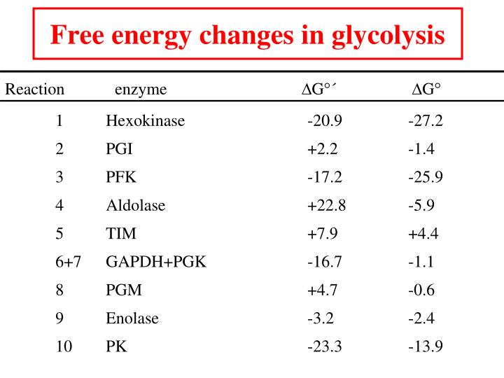 Free energy changes in glycolysis