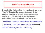 the citric acid cycle