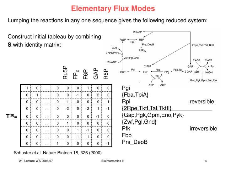 Elementary Flux Modes