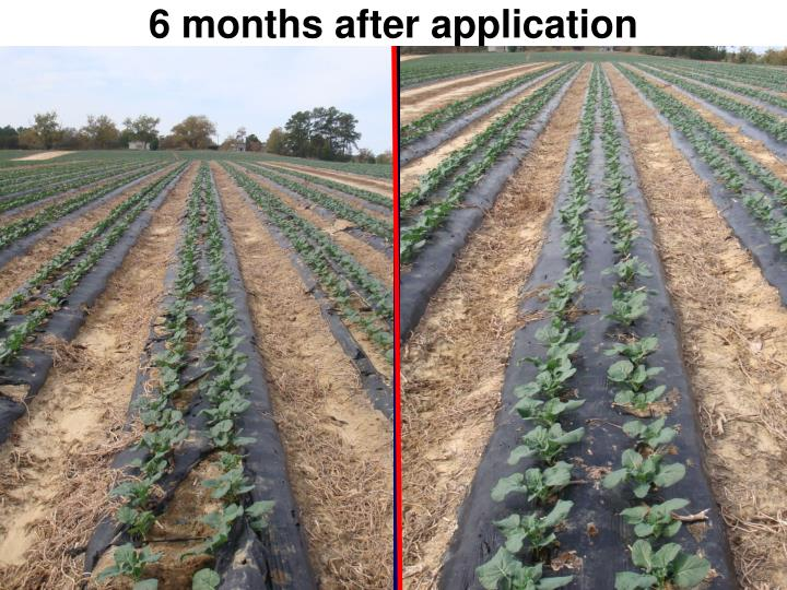6 months after application