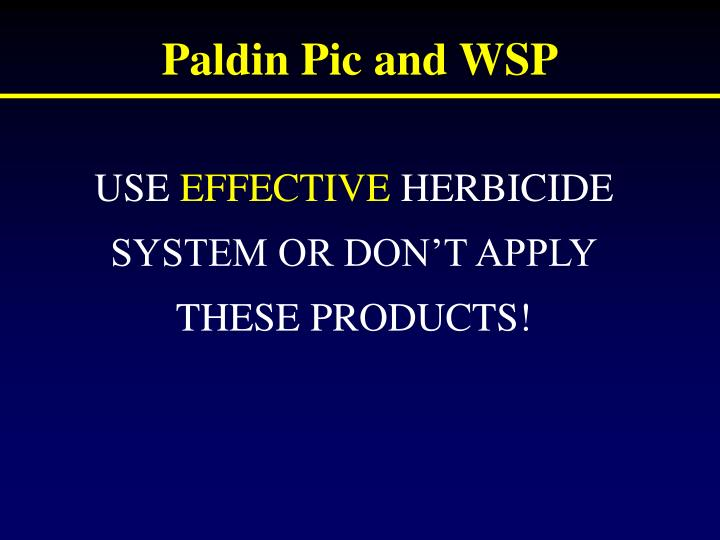 Paldin Pic and WSP