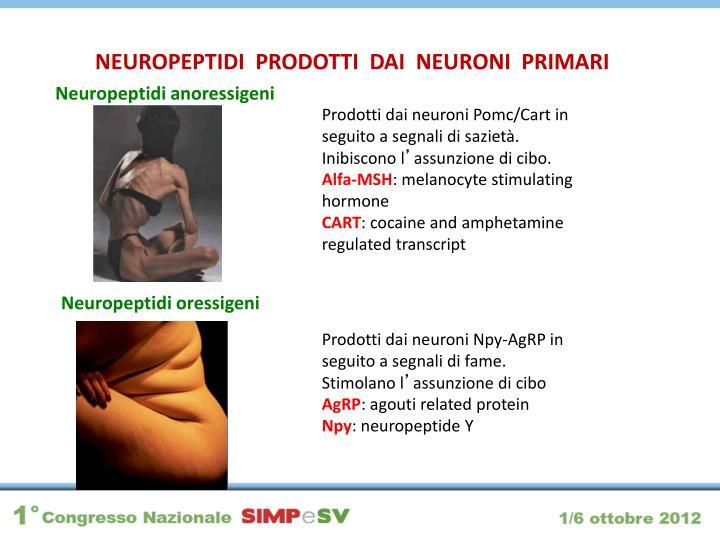 NEUROPEPTIDI  PRODOTTI  DAI  NEURONI  PRIMARI
