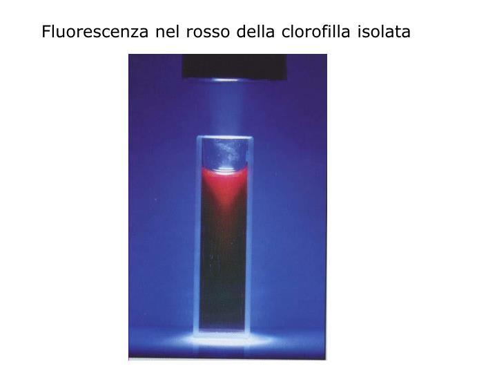 Fluorescenza nel rosso della clorofilla isolata