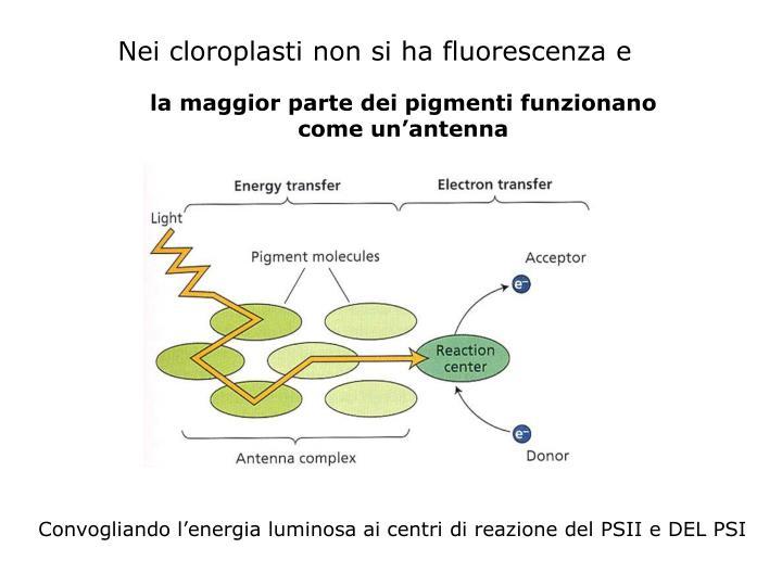 Nei cloroplasti non si ha fluorescenza e