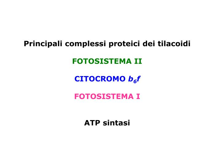 Principali complessi proteici dei tilacoidi
