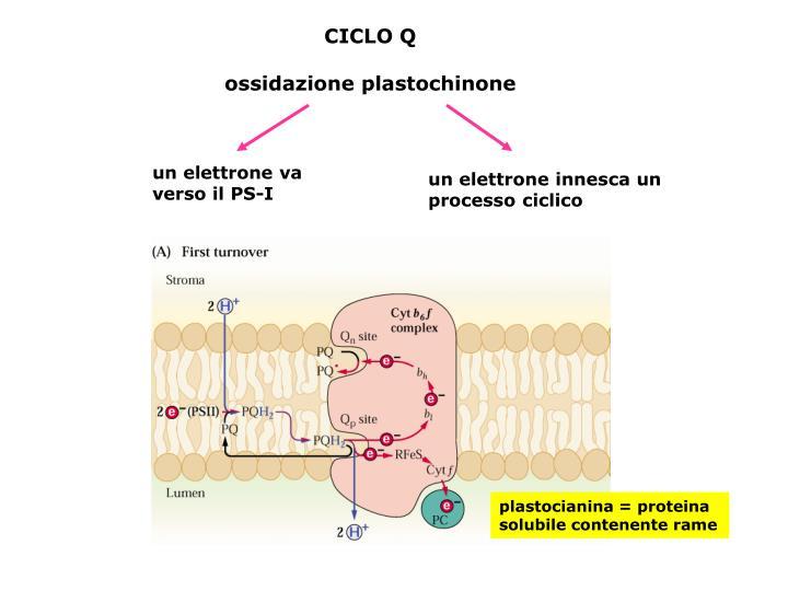 CICLO Q