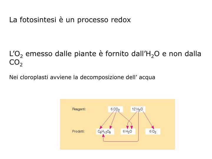 La fotosintesi è un processo redox