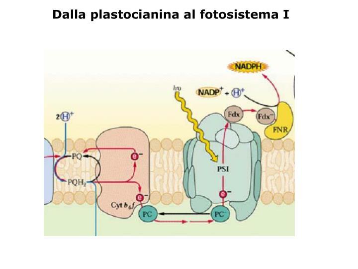 Dalla plastocianina al fotosistema