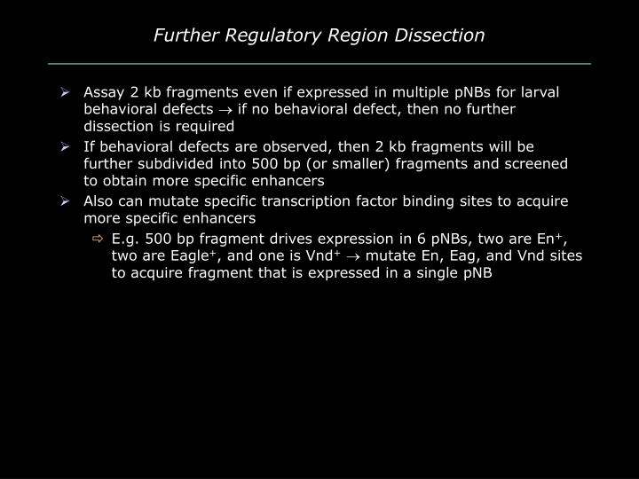 Further Regulatory Region Dissection