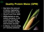 quality protein maize qpm