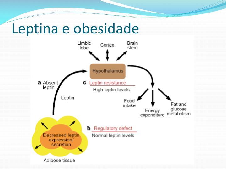 Leptina e obesidade