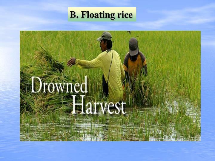 B. Floating rice
