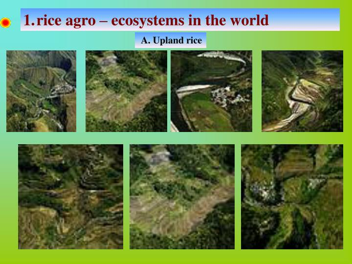rice agro – ecosystems in the world