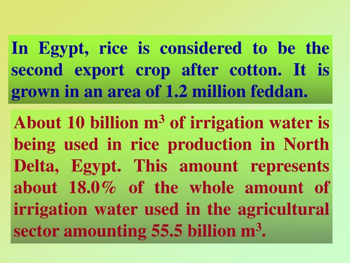 In Egypt, rice is considered to be the second export crop after cotton. It is grown in an area of 1.2 million feddan.