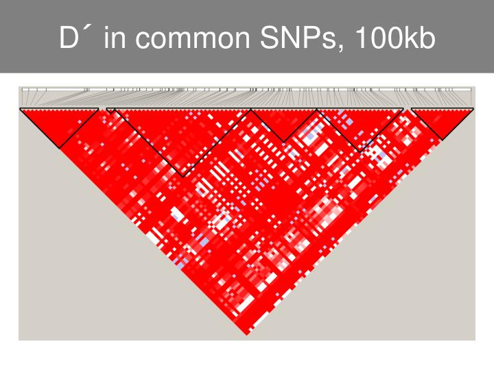 D´ in common SNPs, 100kb