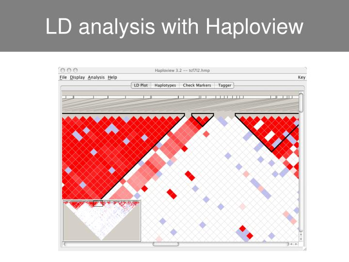 LD analysis with Haploview