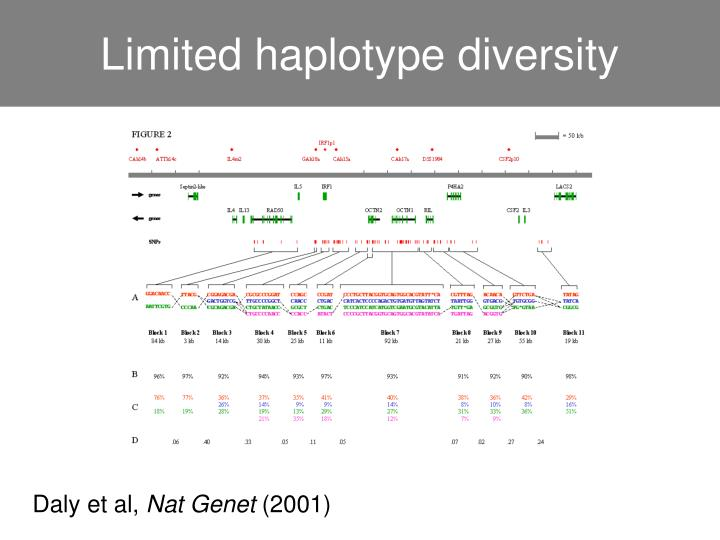 Limited haplotype diversity