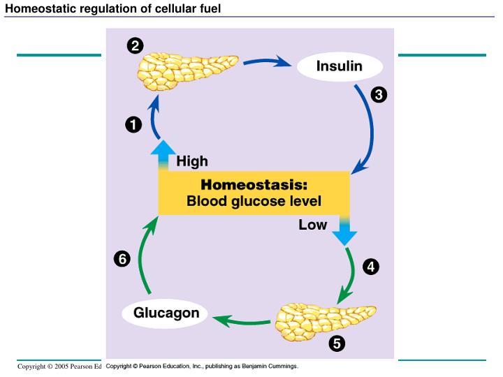 Homeostatic regulation of cellular fuel