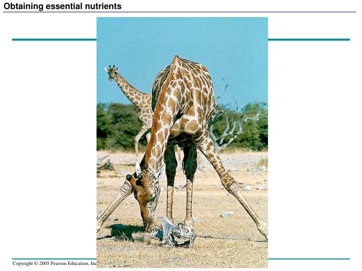 Obtaining essential nutrients