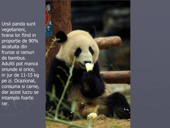 Ursii panda sunt vegetarieni, hrana lor fiind in proportie de 90% alcatuita din frunze si ramuri de bambus. Adultii pot manca oriunde si orice, in jur de 11-15 kg pe zi. Ocazional, consuma si carne, dar acest lucru se intampla foarte rar