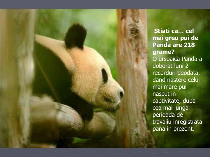 Stiati ca… cel mai greu pui de Panda are 218 grame?