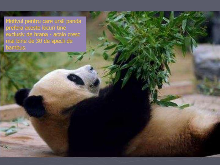 Motivul pentru care ursii panda prefera aceste locuri tine exclusiv de hrana - acolo cresc mai bine de 30 de specii de bambus.