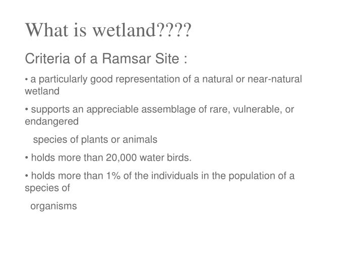 What is wetland????