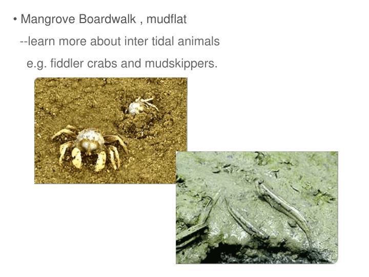 Mangrove Boardwalk , mudflat